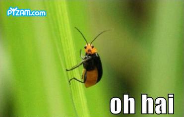 bug1.jpg