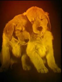 puppylove1612